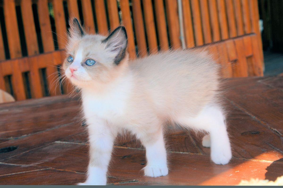 Kittens For Adoption Near Me