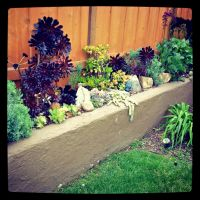 Succulent Border in Retaining wall | Garden | Pinterest ...