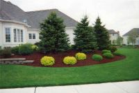 Landscaping: Ideas For Landscaping Under Evergreen Trees ...