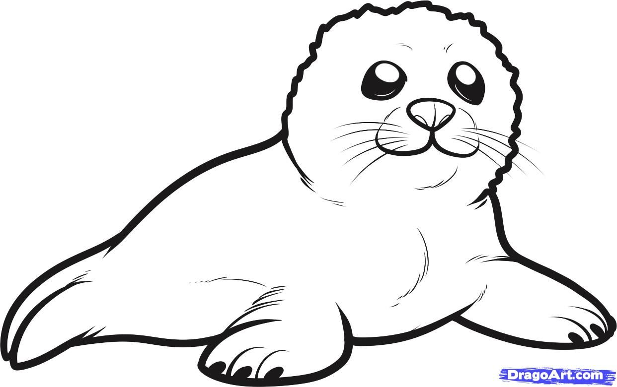 How to Draw a Seal Pup, Seal Pup, Step by Step, Sea