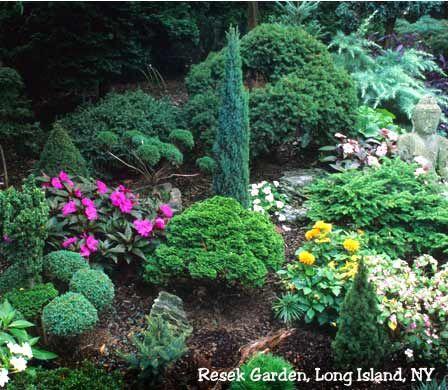 Miniature Conifers Fantasy Garden Pinterest Jardins