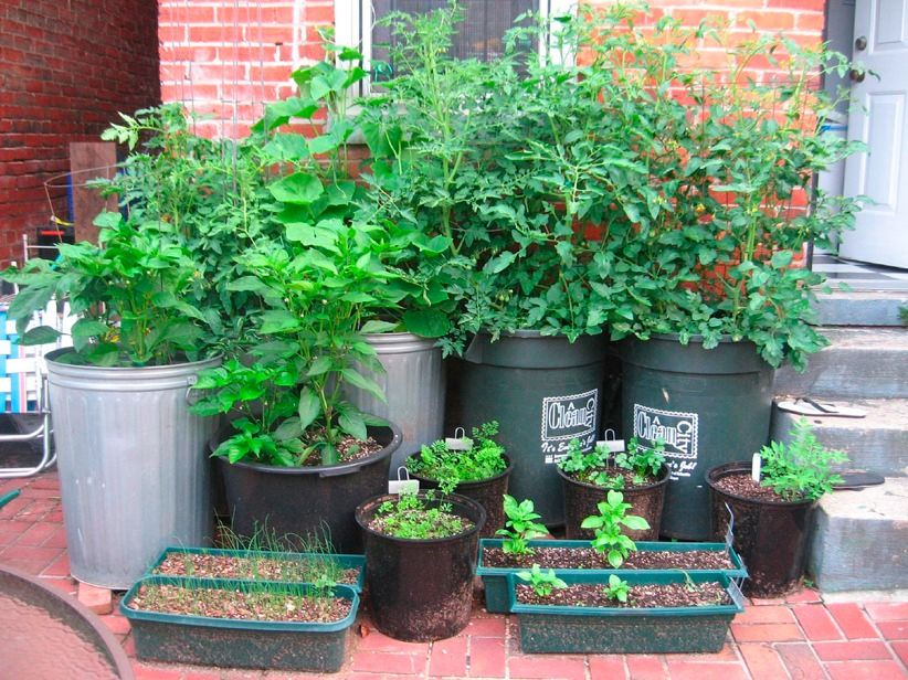 Vegetable Container Garden For More Organic Gardening Ideas