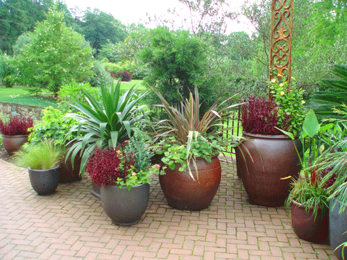 Patio Potted Garden Gardening And Plant Display Pinterest