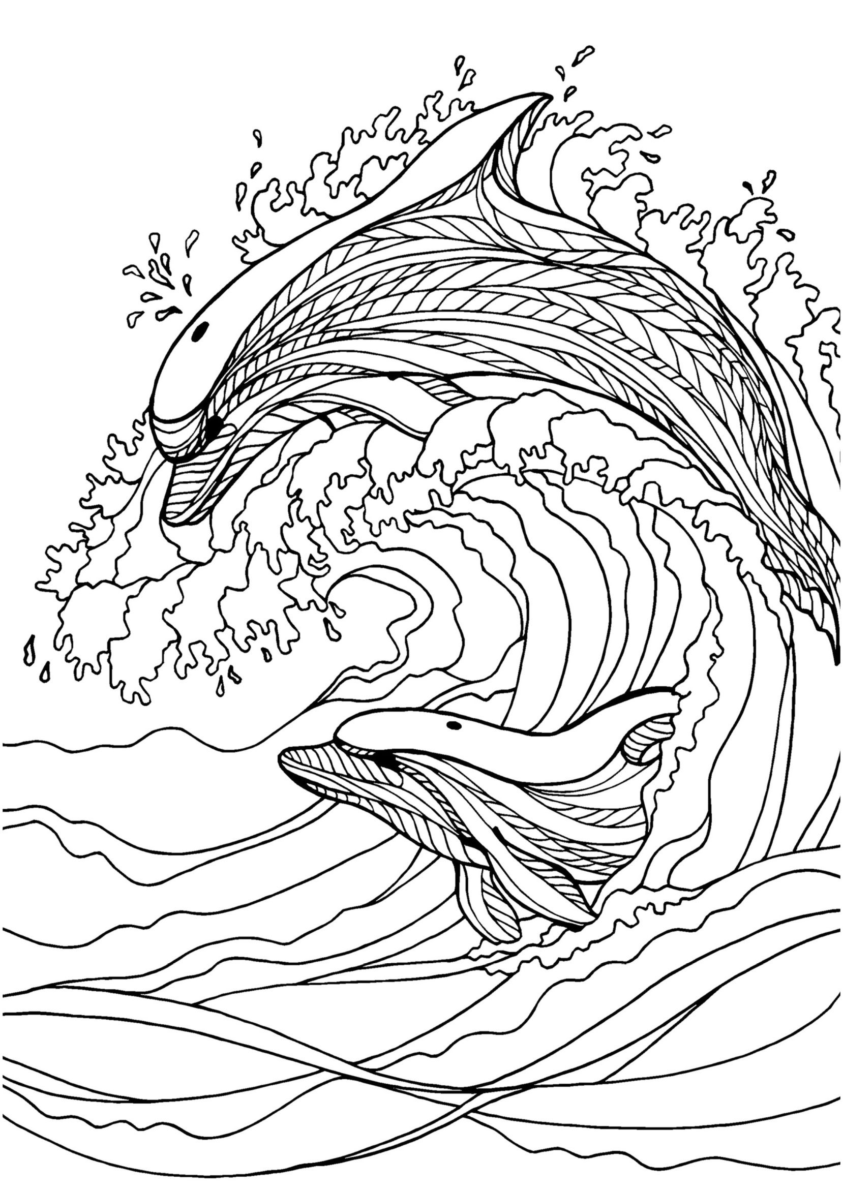 Dolphin Adult Colouring Page Colouring In Sheets