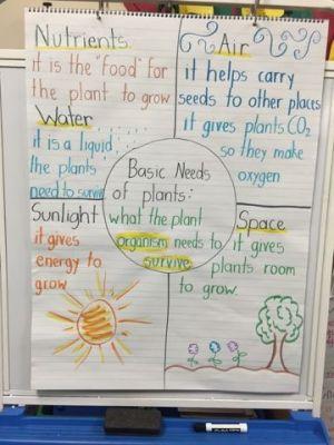 Basic Needs of Plants Ms Hernandez' 2nd Grade Blog   Science 2nd grade   Pinterest   Plants