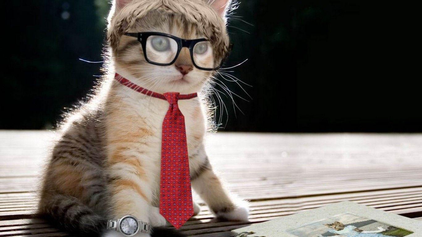funny cat wallpaper full hd   download wallpaper   pinterest