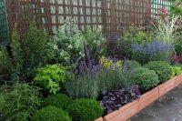 low maintenance landscaping ideas texas | Gardening ...