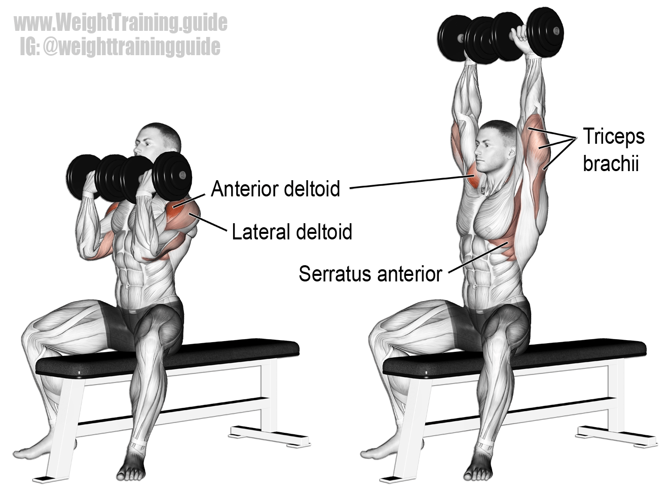 Arnold Press A Compound Push Exercise Invented By Arnold
