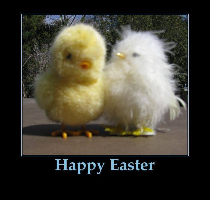 Funny Pictures Happy Easter