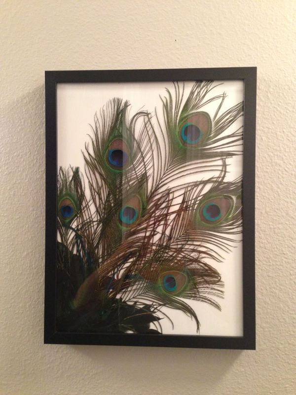 Bathroom. Easy Bunch Of Peacock Feathers In Frame. Love