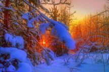 Evening Nature Stunning Winter Snow Landscape Trees Sunset
