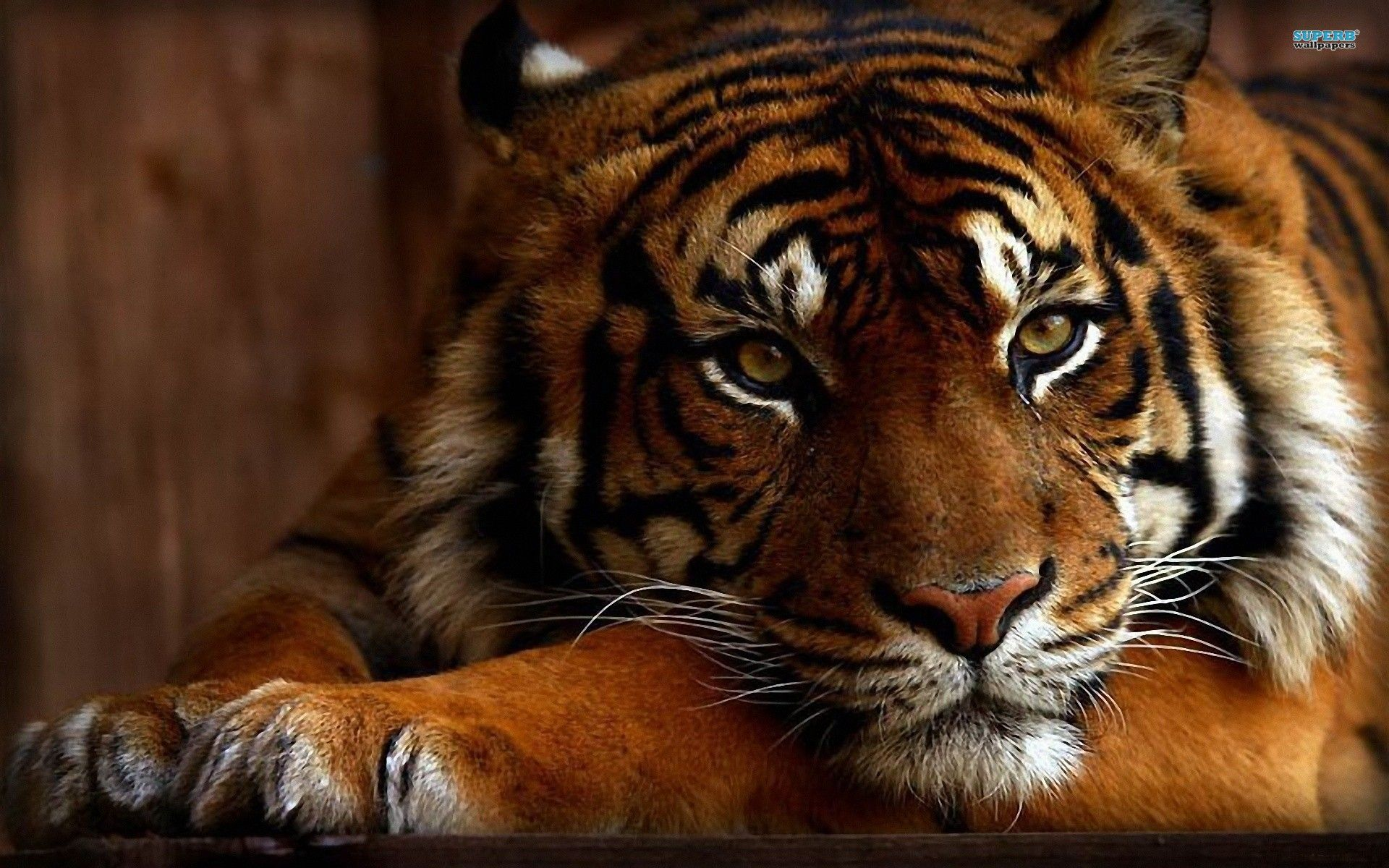 flowers and wild animals | if you like wild animals and cats you