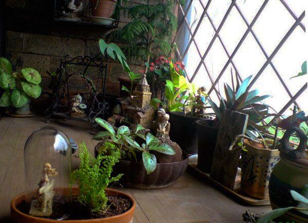 Praniti Verma's Small Garden Ideas For Indian Apartments
