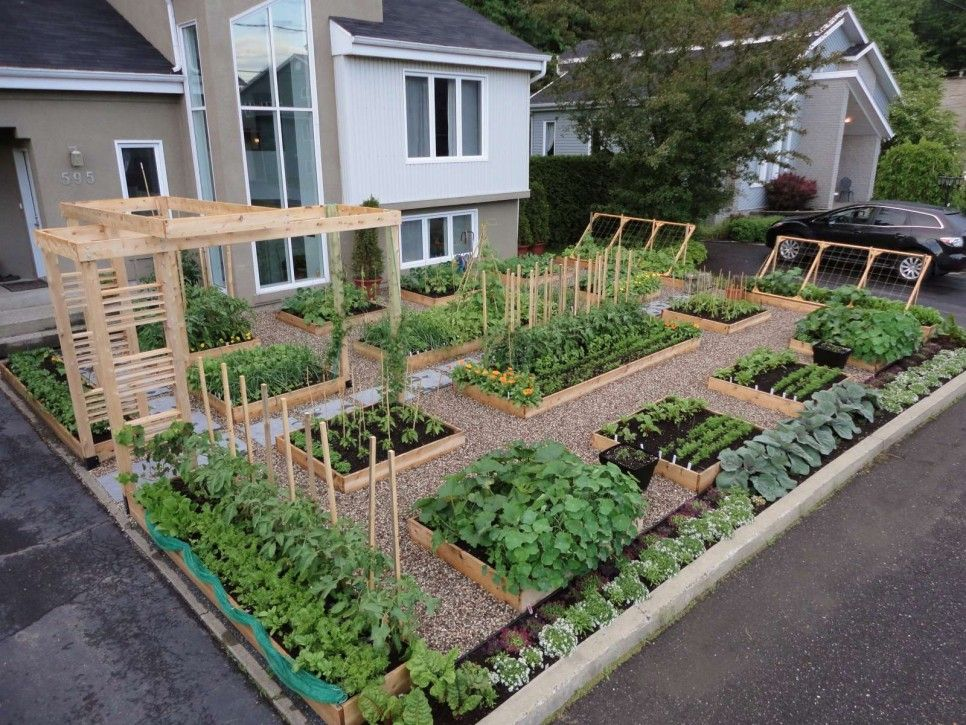 Garden And Patio Inspiring Front Yard Vegetable Garden House