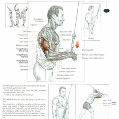 Pull Up Muscles Worked Diagram Alpine Iva D106 Wiring Triceps Cable Push Downs Anatomy And Physiology Of