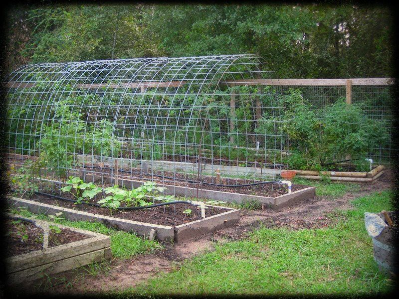 Vegetable Garden Trellis Ideas Space Smart Trellis Arch Between