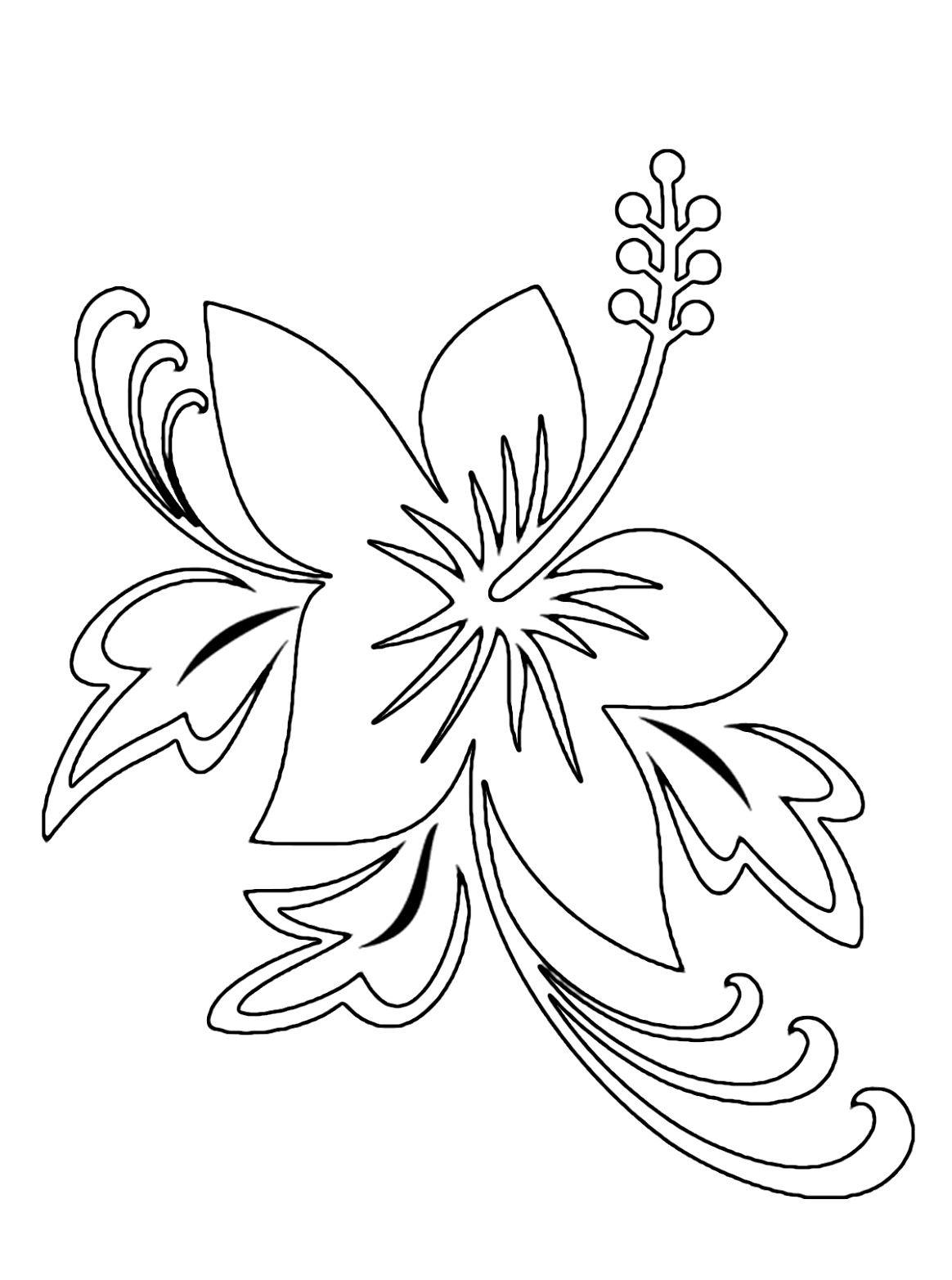 Hawaii Flower Outline Pin Hibiscus Coloring Pages Hd