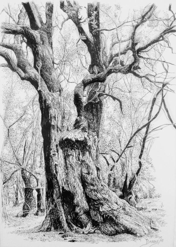 Francisco Santana Drawing #tree #art Tree Art