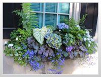 Flower Box Ideas For Partial Sun