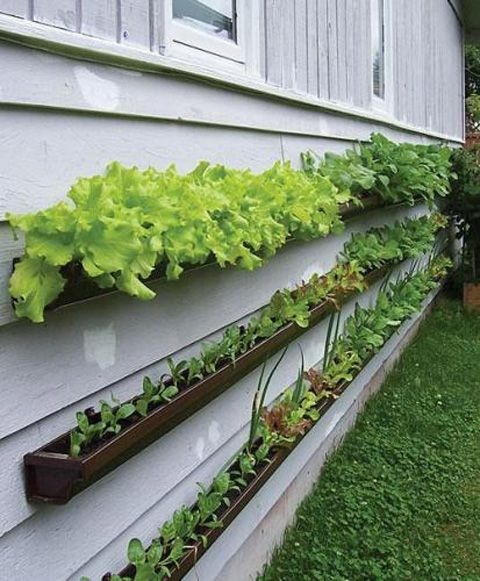 Gutter Garden Growing Your Food In A Small Space Gardens
