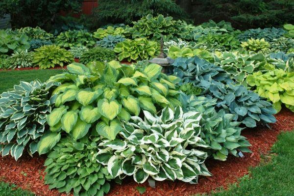 Funkien Pflanzen Garten Pflanzen Exterieur Vorgarten Pinterest