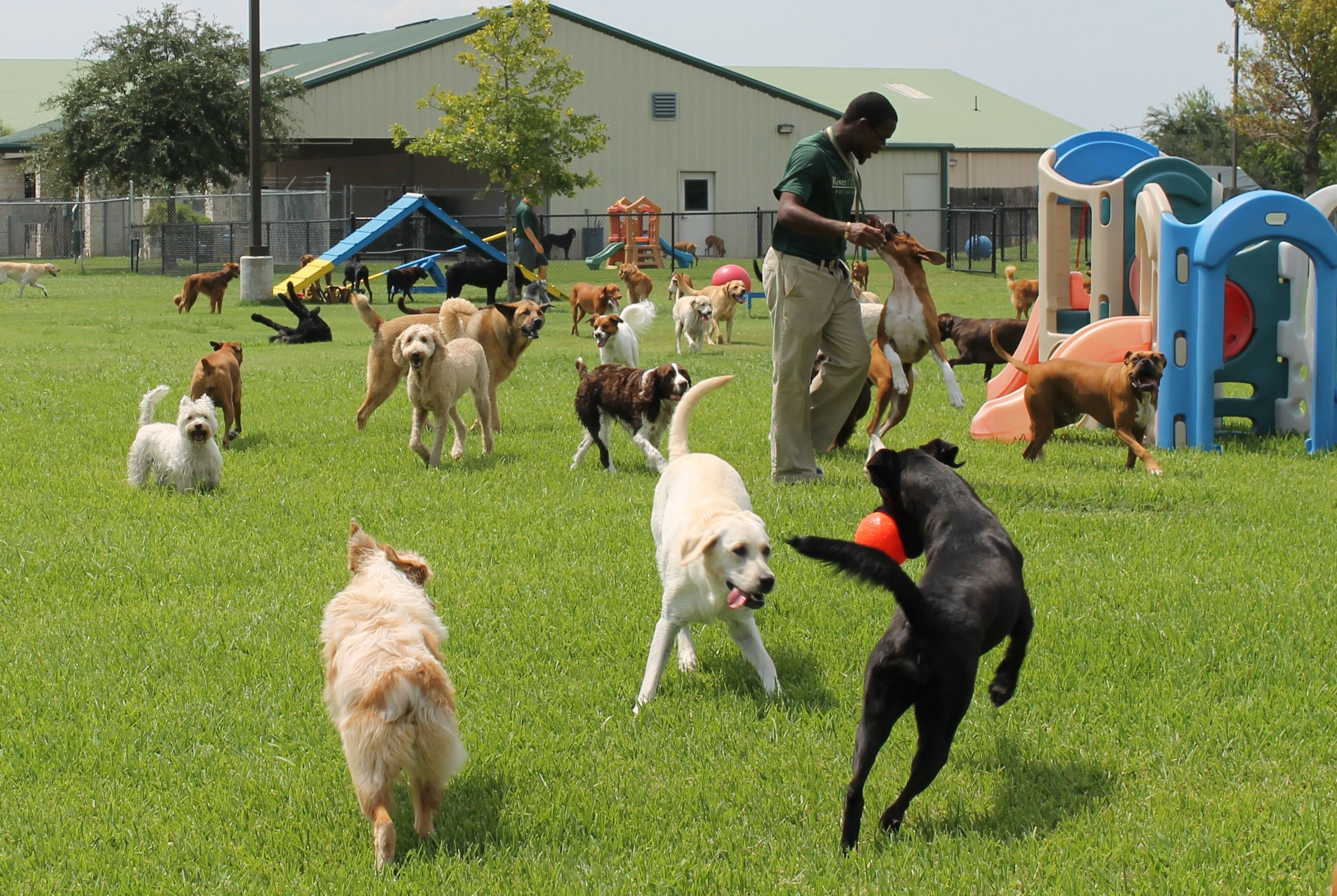 Doggie Daycare at Rover Oaks Pet Resort in Houston & Katy Texas