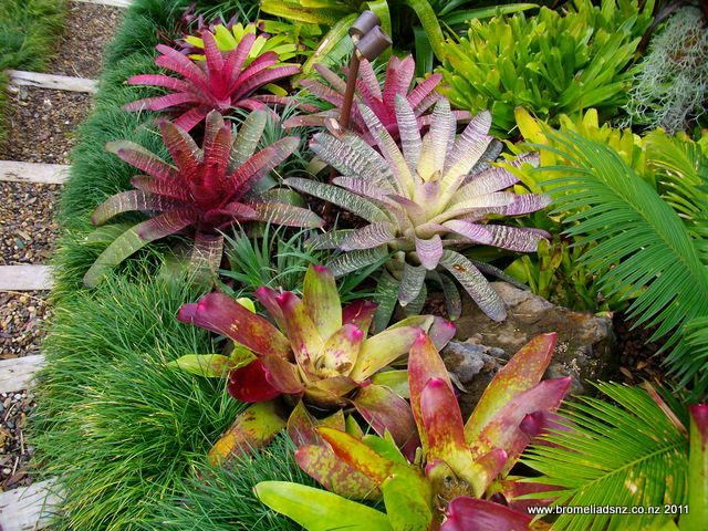 Gallery Bromeliads NZ Love Their Plantings! Would Fit Really