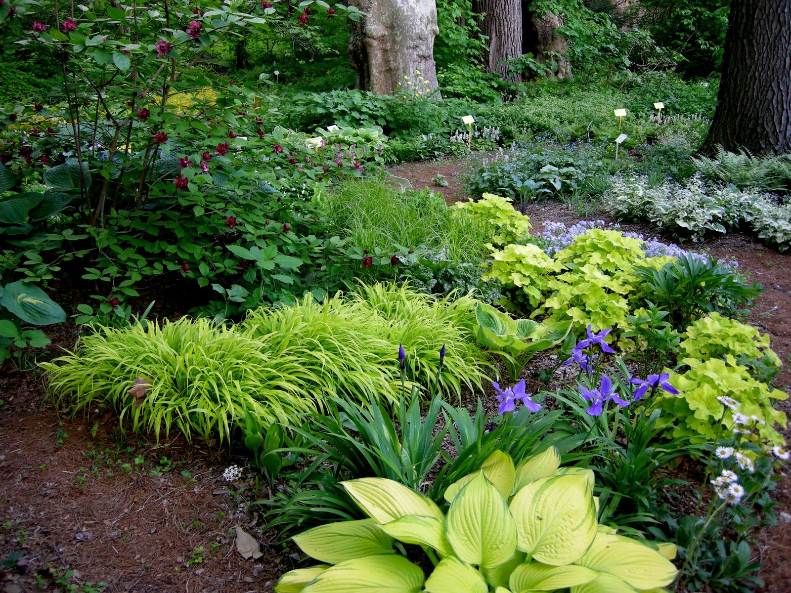 25 Best Ideas About Woodland Garden On Pinterest Forest Garden