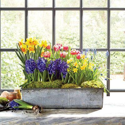 Indoor Container Gardening Ideas Gardens Garden Ideas And Colors