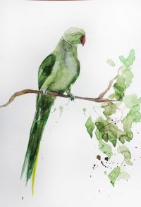 Original Watercolor art, Parrot Bird, green parrot ...
