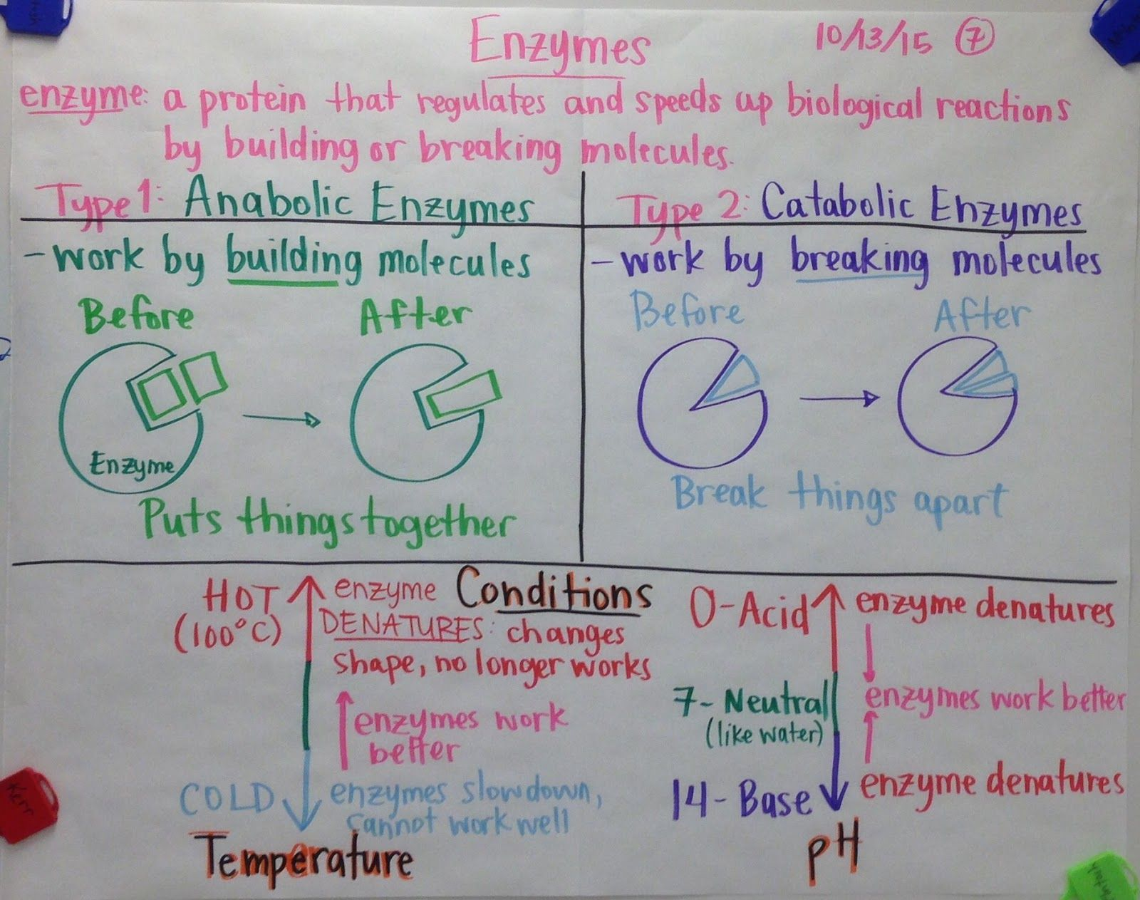 Enzymes Glad Anchor Chart