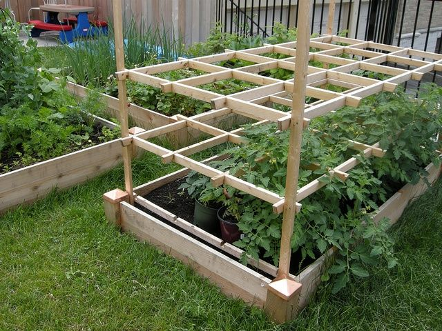 Raised Bed Tomato Trellis This Would Be Great For Cherry Or