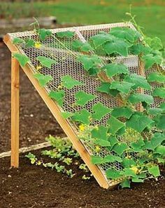 9 Vegetable Gardens Using Vertical Gardening Ideas Gardens
