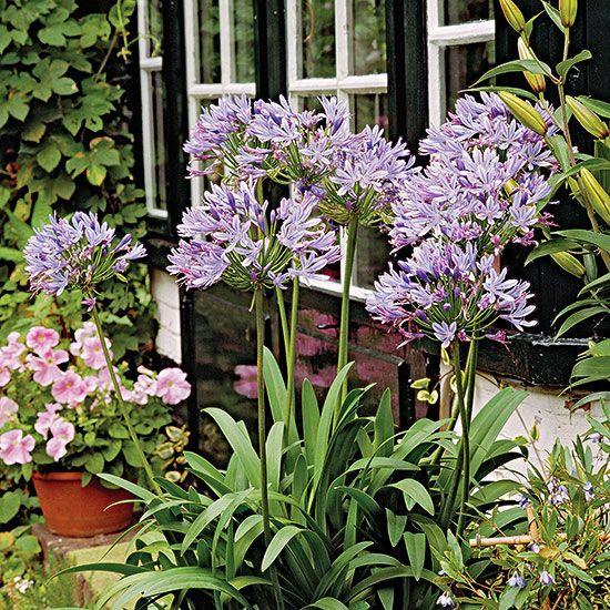 florida plants ideas