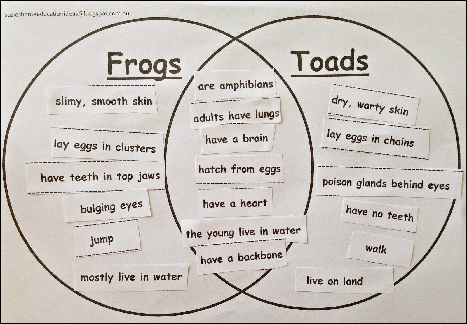 amphibians vs reptiles venn diagram jeep cherokee wiring 1999 life cycle of a frog book suggestions frogs and activities