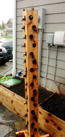 Vertical Planter Planted With Strawberry Plants