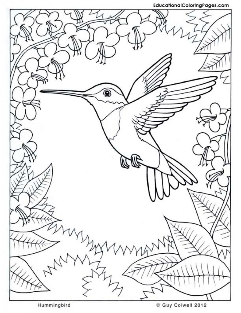 - Difficult Hummingbird Coloring Page For Older Kids Coloring Pages