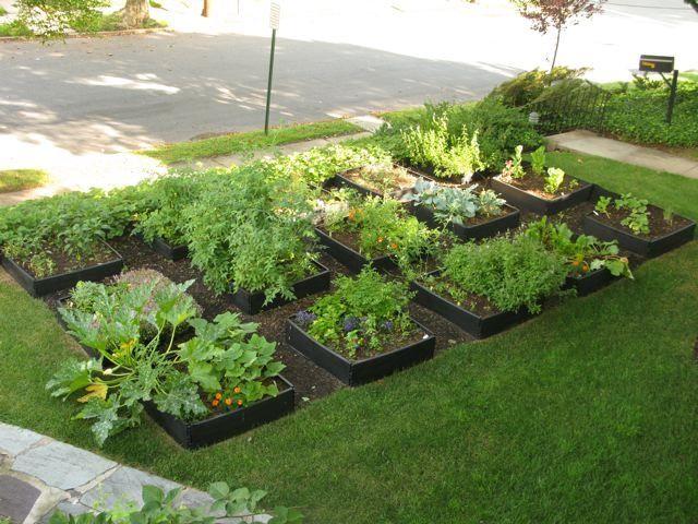 Front Lawn Vegetable Garden Gardens Veg Garden And Sun