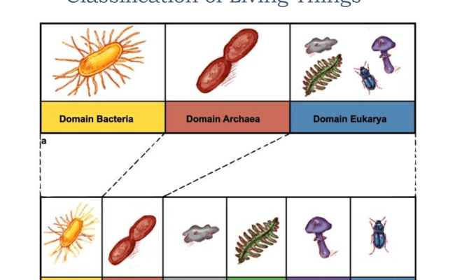 Survey Of The 6 Kingdoms Biology Unit 6 Pinterest School