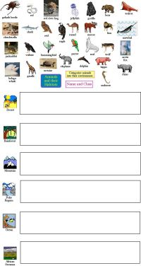 animal classification | Habitat Unit | Pinterest | Animal ...