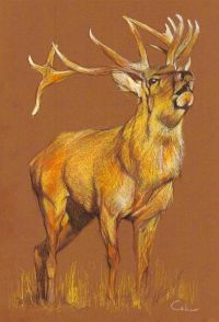 Deer color pencil drawing Wildlife Wall Art by ...