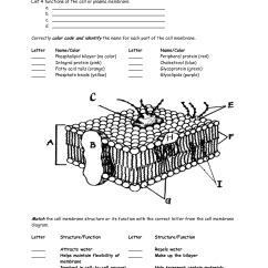 Diagram Of A Section Cell Membrane Chevrolet Stereo Wiring Worksheet Google Search Interactive