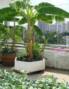Indian Home Garden Ideas Valoblogi Com