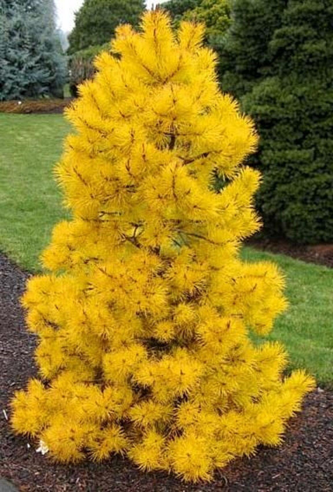 Bushes Colorado Flowers Yellow