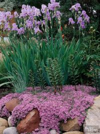 Best Plants for Rock Gardens