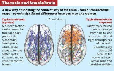 Forskellen på mænd og kvinder findes i hjernen.