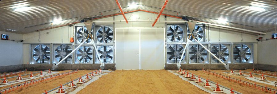 Commercial Poultry House Pictures Building Superior Chicken
