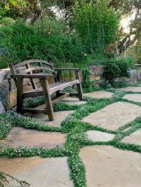 i have creeping thyme! perfect for in betwen patio pavers