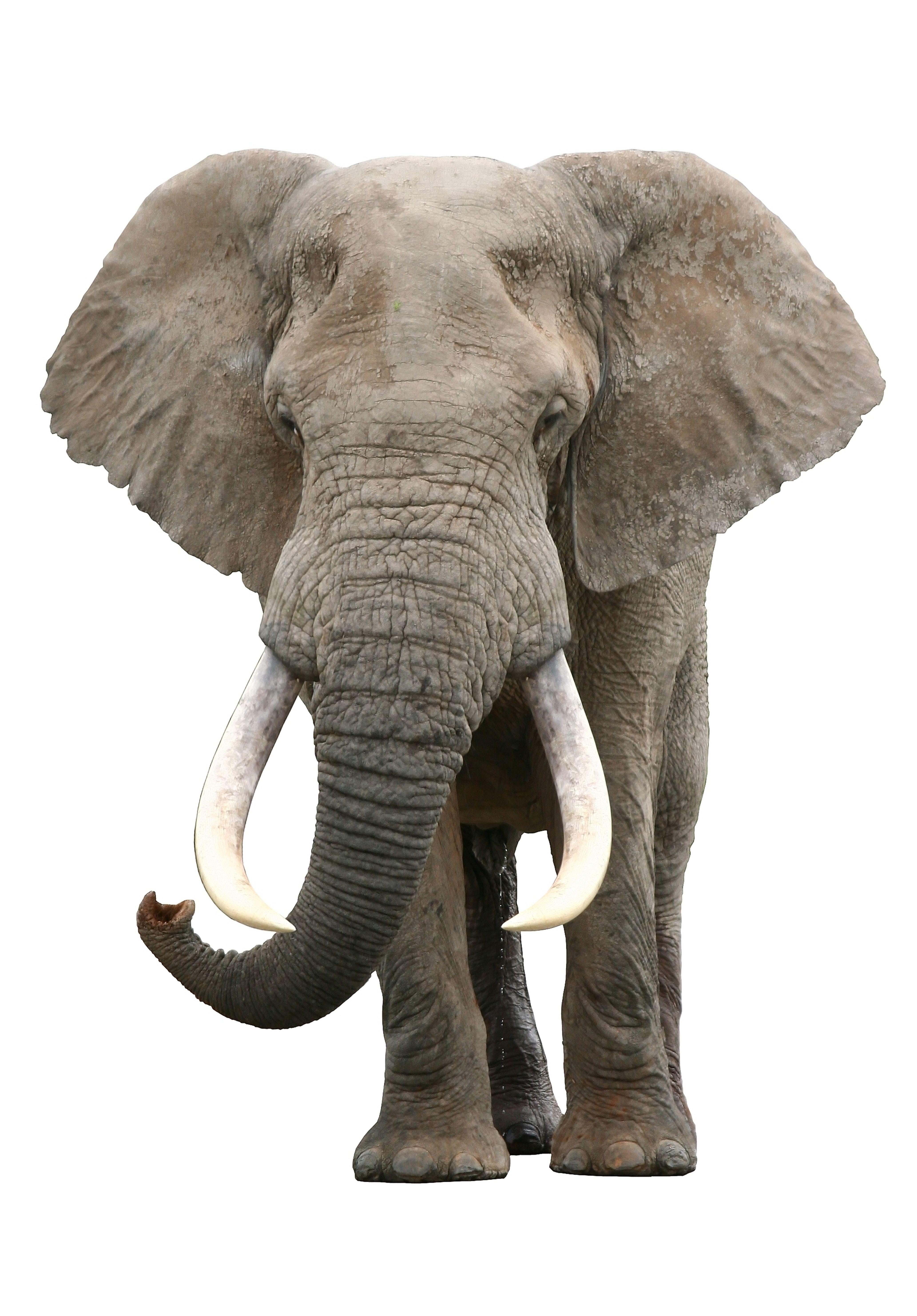 Elephant Cutout