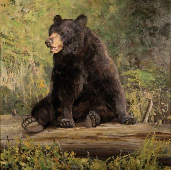 Black Bear Paintings Wildlife Artist